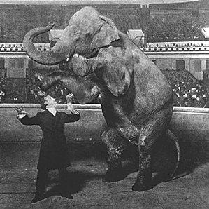 elephant du magicien - bonus