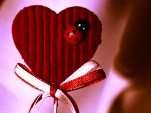 Coeur avec coccinelle