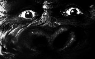 King-Kong sur Seine de François Devenne