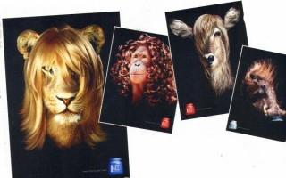 Monsieur Lion chez le coiffeur de Britta Teckentrup