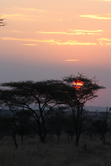 Coucher de soleil sur le Serengeti by Thiery via Flickr