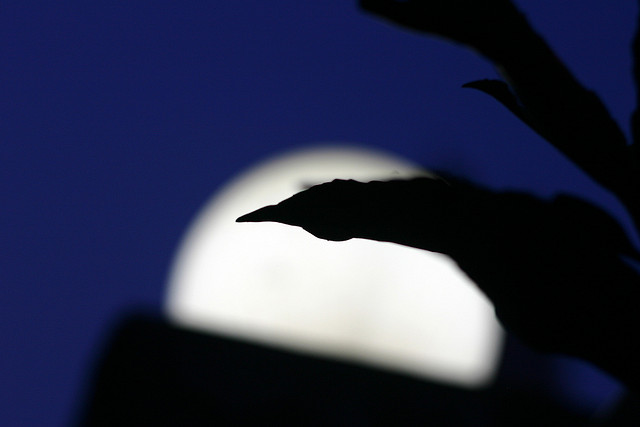 Happy Moon day by Jijis via Flickr