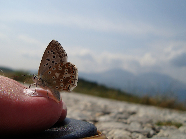 Butterfly dreams by underthesun via Flickr