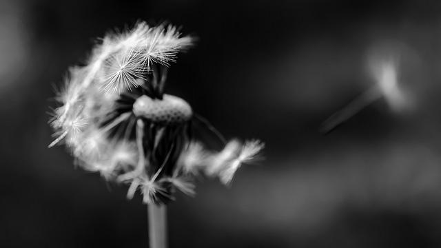 Avec un peut de vent by mgaloseau via Flickr