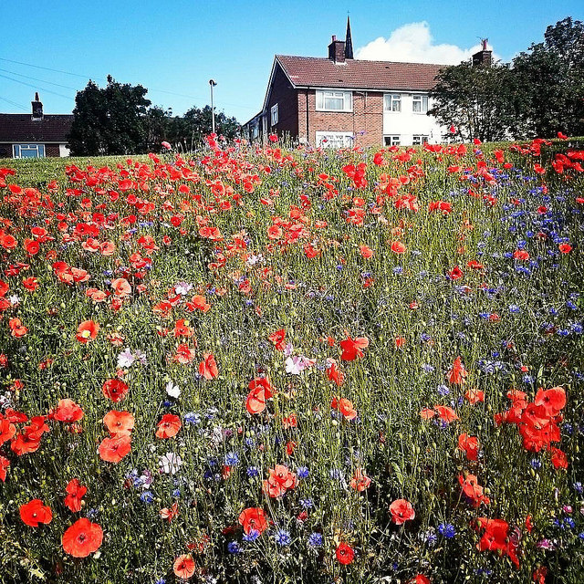 Fabulous Wild Flowers, Everton by Radarsmum67 via Flickr