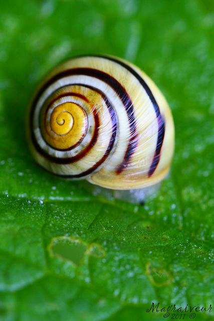 Escargot by Marc Magraiveur via Flickr
