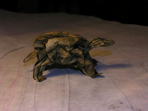 Turtle by Troy Alexander via Flickr