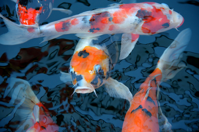 Fishes by ilee_wu via Flickr