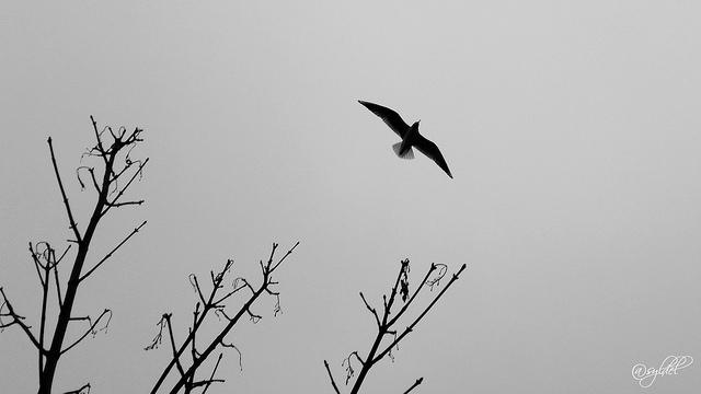 Oiseau à Strasbourg by Sylvain D via Flickr