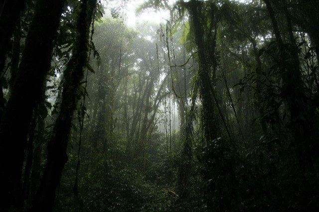Jungle by seliaymiwell via Flickr