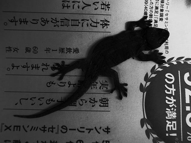 Gecko by Tohiyuki IMAI via Flickr