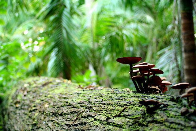 Jungle mushrooms by Luis Estrelas via Flickr